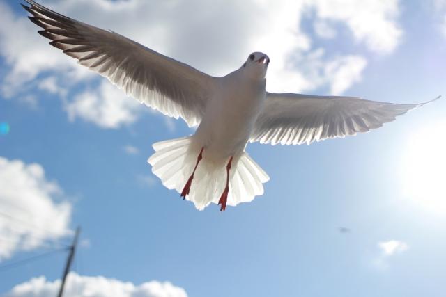 大空をはばたく鳥