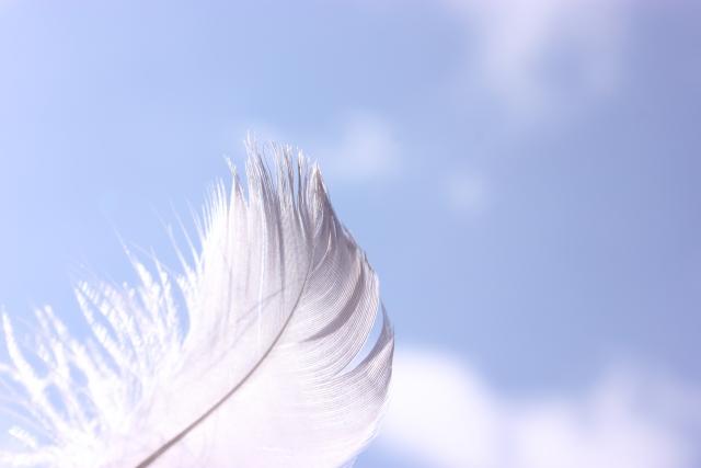 大空と羽根