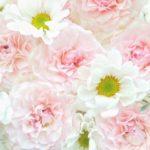 白い花とピンクの花